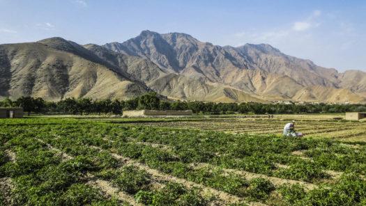 Regional Connectivity: Afghanistan's Key to Economic Self-Reliance